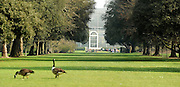 © Licensed to London News Pictures. 22/03/2012. Kew, UK. Canadian geese walk amongst the green grass with a conservatory in the background. People enjoy the spring sunshine in The Royal Botanic Gardens at Kew today, 22 March 2012. Temperatures are set to reach 18 degrees celsius in some parts of the UK today. Photo credit : Stephen SImpson/LNP