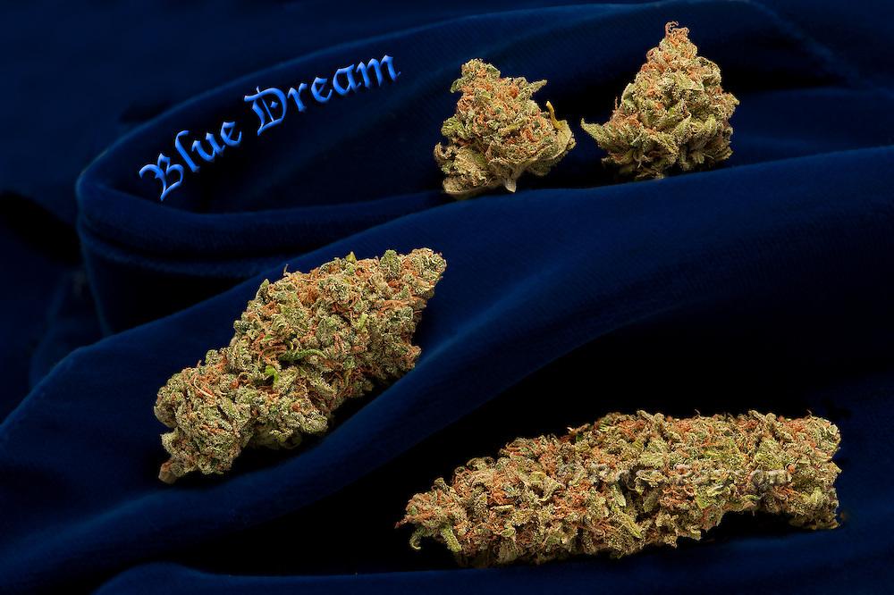 Blue Dream nug photo shot in a professional photography studio..