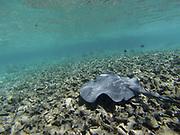 Caye Caulker snorkelling, clear blue azure water, fish, Belize.