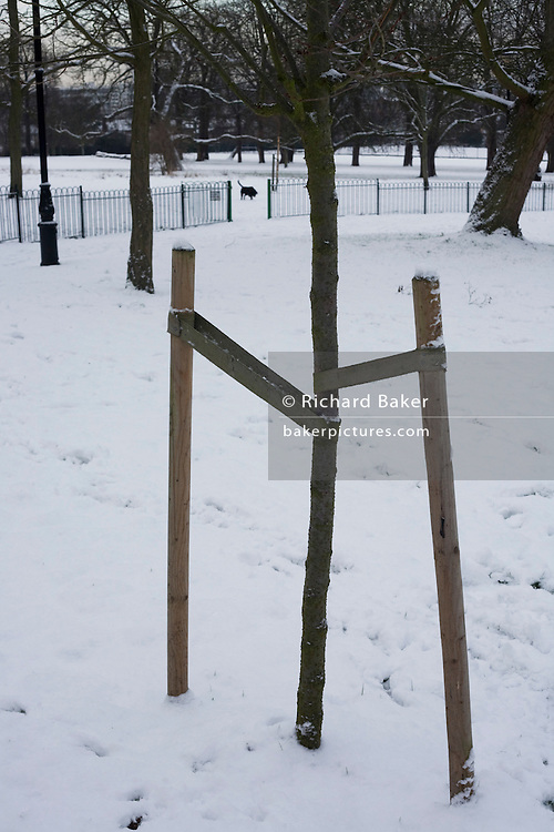 Struts help support a young sapling in Ruskin Park, Lambeth during the harsh winter snows of early 2010,