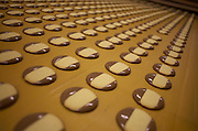 Rows of freshly-made chocolate Moments biscuits on conveyor belt at the Delacre production factory in Lambermont, Belgium