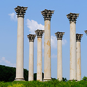 The Captiol Columns at the US National Arboretum in Washington DC, a Department of Agriculture education and research reserve. The 22 sandstone Corinthian columns originally supported the East Portico of the US Capitol Building but removed in 1958 as part of an expansion project. They were salvaged and repaired and moved to the National Arboretum in 1990.