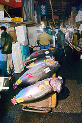 raw bluefin tunas, Thunnus sp., on cart, being transported to a small wholesale store to be filleted immediately after auction, Tsukiji Fish Market or Tokyo Metropolitan Central Wholesale Market, the world's largest fish market, hadling over 2,500 tons and over 400 different kind of fresh sea food per day