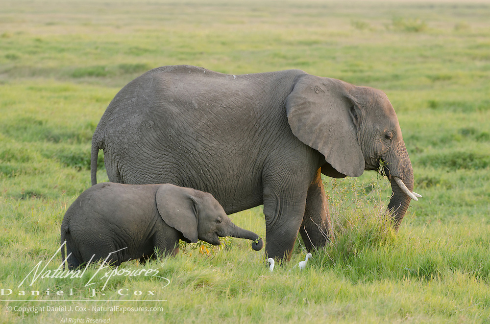 African elephant mother and baby in Amboseli National Park, Kenya, Africa.