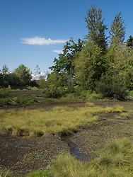 United States, Washignton, Billy Frank Jr. Nisqually National Wildlife Refuge