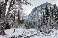 Cross Country skiing along Logan Creek  in Glacier National Park, Montana, USA MR