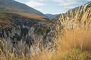 Rocky canyon with forest on top view from behind meadow, Gorges du Verdon, Verdon Natural Regional Park, France