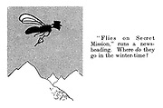 """""""Flies on secret mission,"""" runs a news-heading. Where DO they go in the winter-time?"""