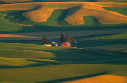 North America, USA, Washington, Palouse County, Steptoe Butte. Red barn with rolling green and gold wheat fields