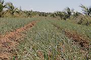 Juazeiro_BA,Brasil.<br /> <br /> Agua Para Todos. Projeto Salitre em Juazeiro, Bahia.<br /> <br /> Agua Para Todos, Salitre project in Juazeiro, Bahia<br /> <br /> Foto:  EMMANUEL PINHEIRO / NITRO
