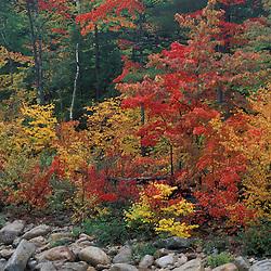 Lower Falls, Swift River.  White Mountain N.F.  Kancamagus Highway.  Albany, NH