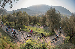 Group of mountain bikers in action during marathon competition in olive grove, Trentino, Italy