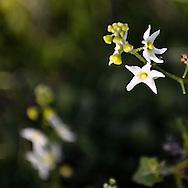Flower near Santa Paula, California