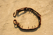 12th February 2015, Mathura, India. A banned ankle chain used by elephant handlers in India to tether and inflict pain on elephants, on show at the Elephant Care and Conservation Centre, run by Wildlife SOS, Mathura, India on the 12th February 2015.<br /> <br /> Elephant handlers (Mahouts) eke out a living in makeshift camps on the banks of the Yamuna River in New Delhi. They survive on a small retainer paid by the elephant owners and by giving rides to passers by. The owners keep all the money from hiring the animals out for religious festivals, events and weddings, they also are involved in the illegal trade of captive elephants. The living conditions and treatment of elephants kept in cities in North India is extremely harsh, the handlers use the banned 'ankush' or bullhook to control the animals through daily beatings, the animals have no proper shelters are forced to walk on burning hot tarmac and stand for hours with their feet chained together. <br /> <br /> PHOTOGRAPH BY AND COPYRIGHT OF SIMON DE TREY-WHITE, a photographer in Delhi<br /> + 91 98103 99809<br /> email: simon@simondetreywhite.com
