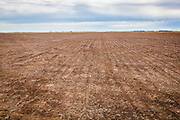 2014/11/20 – Monte Maiz, Argentina: A field in Monte Maiz, after being pulverized with glyphosate where no weeds survived, is ready to be used for soy plantation. The seeds of soy are genetic modified so they are able to resist to pesticides like glyphosate. (Eduardo Leal)
