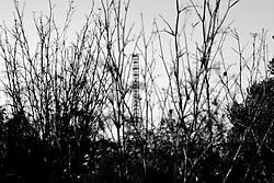 Un traliccio molto imponente posizionato di fronte alla zona artigianale di Ostuni, in zona panoramica, nascosto da una pianta di finocchi selvatici