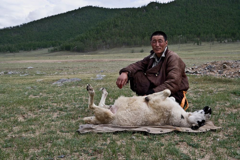 Portrait of a Mongolian Farmer with a Sheep