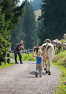 Boy helping his family herd their cattle, Swiss Alps
