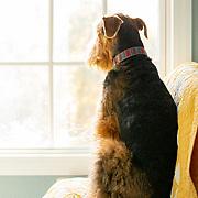 20191020 Brostrom Dogs