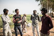 Trafic d'épouse 11032019. Haryana. Biwhat district. Village. Quand Mobin, le mari de Sanjida, ne part pas pour Gurgaon chercher des rickshaws à conduire, il travaille aux champs, comme la plupart des hommes. Ses yeux d'un bleu délavé fuient le regard. À l'ombre d'un arbre, il admet avoir dépensé 50 000 roupies (640 euros) pour organiser la cérémonie de son mariage avec Sanjida, mais pas l'avoir achetée. Derrière son épaisse barbe poivre et sel, Mobin brode une histoire qu'il juge sans doute plus acceptable à nos yeux. « Sanjida est venue au village avec sa sœur, veut-il faire croire. Un neveu a servi d'intermédiaire pour notre mariage arrangé. Je ne m'énerve jamais contre elle, je ne lui fais pas de mal… » Salim Khan, le relais local d'Empower People, les aide à s'organiser. Toujours tiré à quatre épingles, les traits impassibles derrière des lunettes rectangulaires, ce notable de 28 ans est connu comme le loup blanc à Mewat. Salim Khan a été l'un des premiers à s'ériger contre le trafic des épouses, dont il est témoin depuis l'enfance. Son père a longtemps siégé au panchayat, l'assemblée rurale chargée des affaires courantes. « Les 'paros' venaient le voir pour lui faire part de leur problème », se souvient-il. Son engagement lui vaut encore aujourd'hui des menaces. « J'entends souvent : 'Quitte ce boulot et arrête d'aider ces femmes, ou il va t'arriver des problèmes', sourit-il. Même dans ma famille, on m'a dit que j'étais fou. »