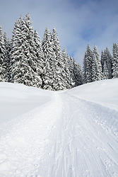 Snowmobile track on snow by snowcapped trees