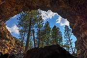 The opening of the Hidden Forest Cave frames a stand of tall ponderosa pine trees in Deschutes National Forest, Oregon.