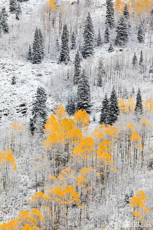 A fresh snowfall covers a hillside in a valley outside of Aspen.