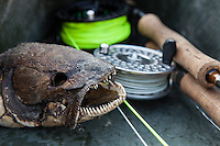 bowfin skull and fly rods in bottom of guide boat, lake Champlain, Vermont