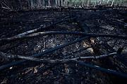 Parintins_AM, 19 de novembro de 2012.<br /> <br /> Educacao Ambiental do programa de Conservacao do Gaviao Real em comunidades do assentamento Vila Amazonia.<br /> <br /> Foto: JOAO MARCOS ROSA / NITRO
