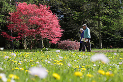 © Licensed to London News Pictures. 22/04/2015. Bristol, Avon, UK. An elderly couple walking past Japanese Maple trees, the through the National Maple Collection at Westonbirt, The National Arboretum today, 22nd April 2015. The south west of England is set for more warm temperatures and plenty of sunshine today. Photo credit : Rob Arnold/LNP