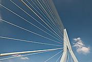 Erasmus Bridge in Rotterdam is often called The Swan.