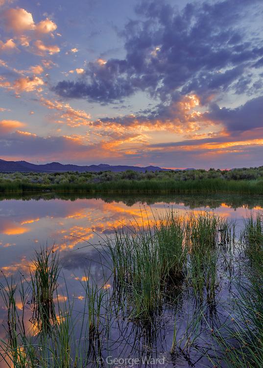 Dechambeau Ponds at Dawn, Mono Basin, National Forest Scenic Area, California