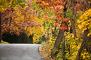 country road with autumn leaves