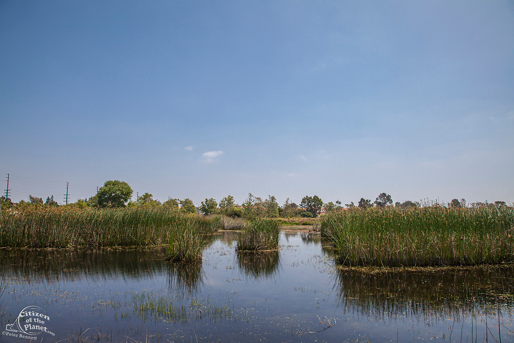 Madrona Marsh Wetlands is a vernal freshwater marsh and is approximately 43 acres. torrance, California, USA