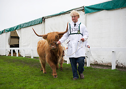 © Licensed to London News Pictures. 10/07/2012..Harrogate, England...England's premier agricultural show opened it's gates today for the start of three days of showcasing the best in British farming and the countryside...The event, which attracts over 130,000 visitors each year is the 154th show and displays the cream of the country's livestock and offers numerous displays and events and gives the chance to see many different countryside activities...Photo credit : Ian Forsyth/LNP