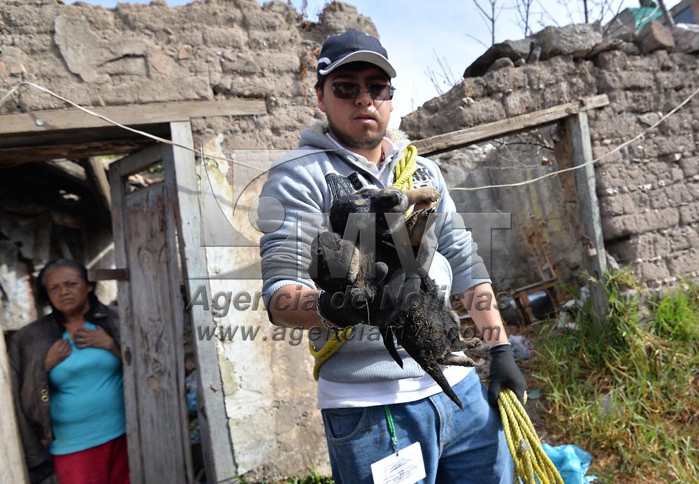 TOLUCA, México.- (Febrero 01, 2018).- Después de registrarse un nuevo ataque de perros callejeros en San Miguel Apinahuizco, vecinos y personal de Control Animal de Toluca capturaron a más de 20 perros que se encontraban en esta zona y que han atacado ya en varias ocasiones. Agencia MVT / Crisanta Espinosa.