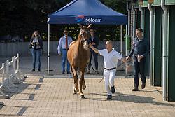 20, Jolie Girl<br /> Stamboek keuring KWPN Turnhout 2020<br /> 20, Jolie Girl<br /> 18/07/2020