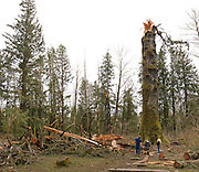 "Tourists look at the remains of the ""Klootchy Creek Giant"", formerly the largest sitka spruce tree in the United States. It snapped off 75 feet above the ground in a December 2007 wind storm that had gusts over 100 mph. The tree, estimated at 700 years old, was 206 feet tall."
