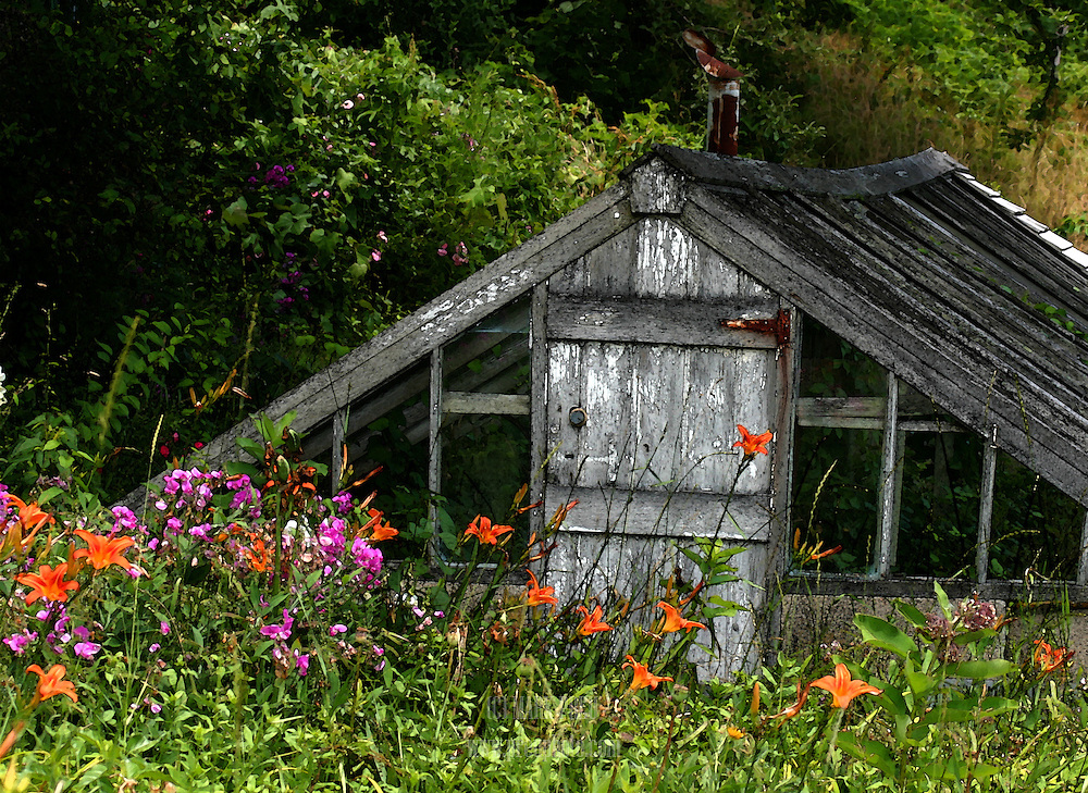 This scene of an old greenhouse surrounded by flowers looked like a watercolor to me, so I altered the image and printed it on watercolor paper to enhance the effect.