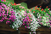 Austria, Tyrol, flowers blooming on a balcony