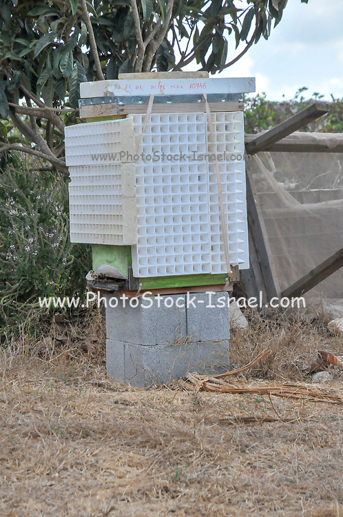Bee hives & wildflowers in the field. Photographed at Kibbutz Harduf, Israel