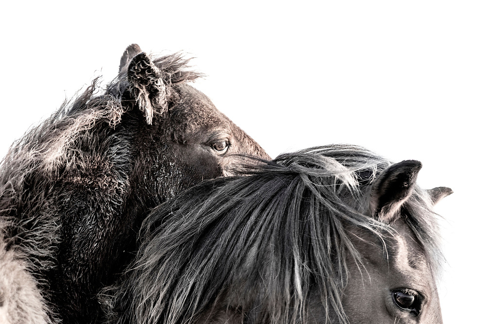 """""""Have enough courage to trust love one more time and always one more time"""" ~ Maya Angelou<br /> <br /> Tracie Spence's fine art photography series of The Spanish Wild Mustangs."""