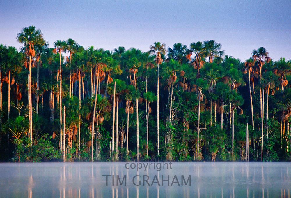Palm trees at Lake Sandoval, Peruvian Rainforest, South America