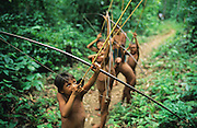 YANOMAMI TRADITIONAL LIFESTYLES , Amazon, near Boavista, northern Brazil, South America. Yanomami boys with bows and arrows. Practising and learning tyraditional skills, walking through the forest like real hunters, as their fathers and ancestors have done for generations. Ecological biosphere and fragile ecosystem where flora and fauna, and native lifestyles are threatened by progress and development. The rainforest is home to many plants and animals who are endangered or facing extinction. This region is home to indigenous primitive and tribal peoples including the Yanomami and Macuxi.