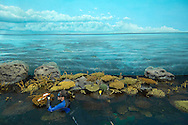 PRT, Portugal: Oceanario de Lisboa, das zweitgroesste seiner Art weltweit,  Lebensraum Indischer Ozean, Taucherin putzt die kuenstlichen Korallen des Korallenriffs, auch der weite Ozean ist Fake in Form einer Wandtapete, Lissabon, Lissabon | PRT, Portugal: Oceanario de Lisboa, the second largest world wide, habitat Indian Ocean, female diver cleaning man-made corals of the reef, the wide ocean is a fake in therms of a wallpaper, Lisbon, Lisbon |
