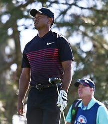 January 25, 2018 - San Diego, California, United States - Tiger Woods watches his shot off the 6th tee during the first round of the 2018 Farmers Insurance Open at Torrey Pines GC. (Credit Image: © Debby Wong via ZUMA Wire)