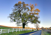 Oak tree with moon photographed on Old Ivy Road in Charlottesville, VA. Photo/Andrew Shurtleff