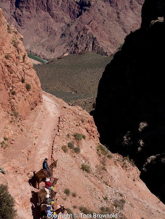 Mule riders on the South Kaibab trail with the Inner Gorge of the Colorado river in Grand Canyon below.