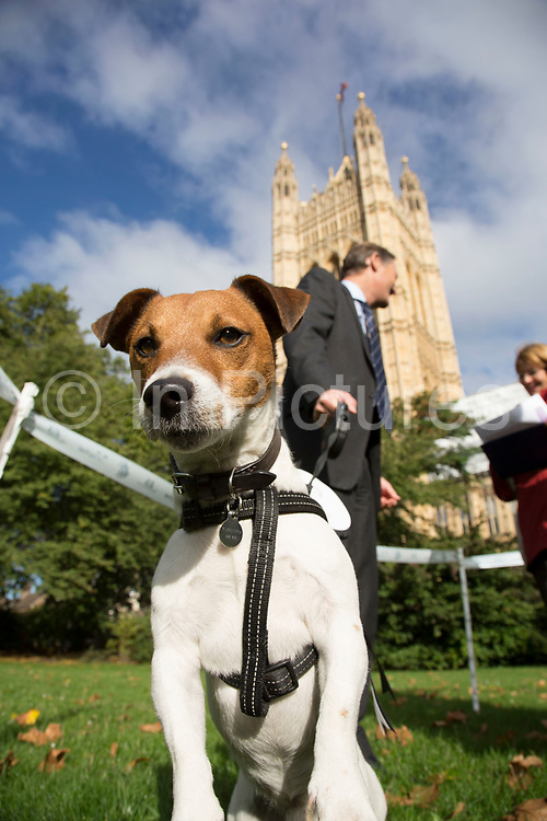 London, UK. Thursday 10th October 2013. Matthew Offord MP with his Jack Russell terrier, Maximus. MPs and their dogs competing in the Westminster Dog of the Year competition celebrates the unique bond between man and dog - and aims to promote responsible dog ownership.