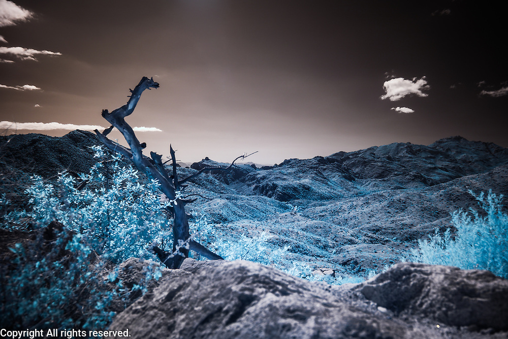 Infrared (IR) image - View from the Catalina Highway.  This image was made around 6000 feet (above sea level).  I like the dead branch in the foreground because it provides a visual anchor for the image.  I also like the vibrant blue color of the foliage.
